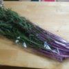 紫色の赤水菜を食べてみました。